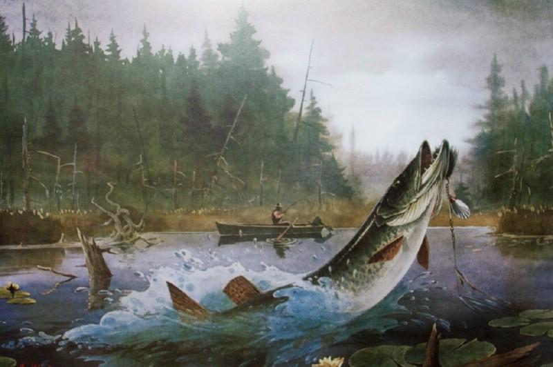 Muskiefirst Artwork 187 General Discussion 187 Muskie Fishing