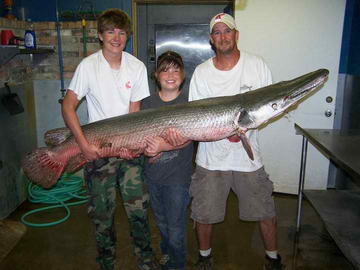 Muskiefirst alligator gar 65 sturgeon and the new kids for Gar fishing lures